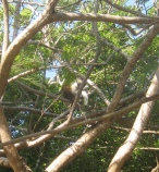 med vores hus-abe