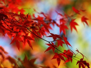 red autumn2